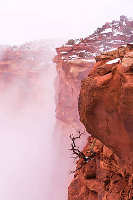 Trees In Snow Photograph - Atop Canyonlands by Chad Dutson