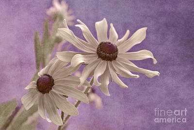 Floral Photograph - Attachement - S09at01b2 by Variance Collections