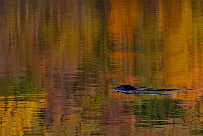 Photograph - Atumn Reflections by Susan Candelario