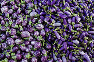 Aubergines Art Print by Tim Gainey