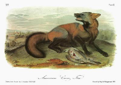 Carcass Painting - Audubon Fox by Granger