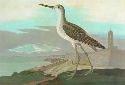 Of St. Augustine Painting - Audubon Greenshank by Granger