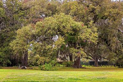 Sheepdog Photograph - Audubon Park by Steve Harrington