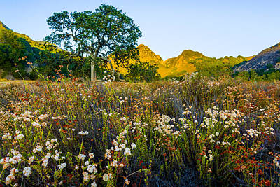 August Sunrise In Malibu Creek State Park Art Print