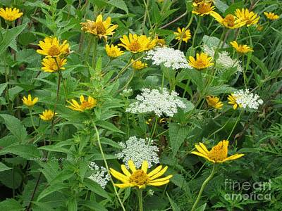 Photograph - August Wildflowers by Kathie Chicoine