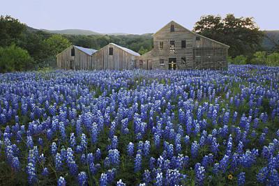 Photograph - Aunt Amelia's Ranch by Susan Rovira