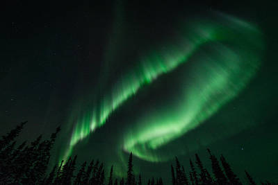 Photograph - Aurora Curtain by Roger Clifford