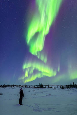 Observer Photograph - Aurora Watcher With Twilight Curtains by Alan Dyer