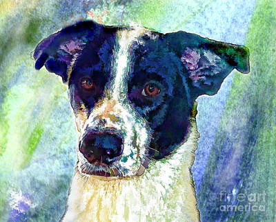 Border Collie Digital Art - Austin by Robin  Waters