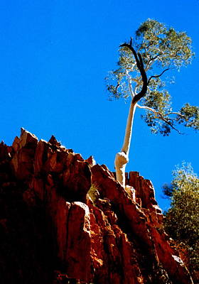Photograph - Australia - Ghost Gum Tree by Jacqueline M Lewis