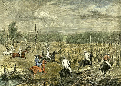 Kangaroo Drawing - Australia Kangaroo Hunt 1880 by Australian School