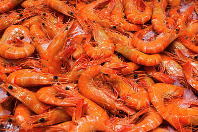 Prawn Photograph - Australia, Sydney Fish Market, Shrimp by Walter Bibikow