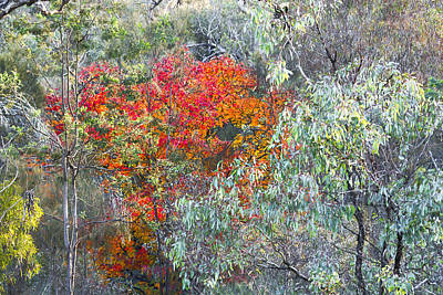 Photograph - Australian Bush by Steven Ralser