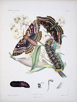 Australian Butterflies Art Print by Philip Ralley