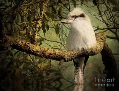 Photograph - Australian Kookaburra by Kym Clarke