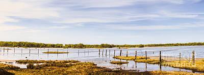 Australian Mangrove Landscape Panorama Art Print