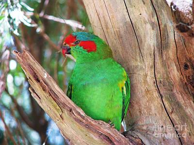 Photograph - Australian Parrot by Michele Penner