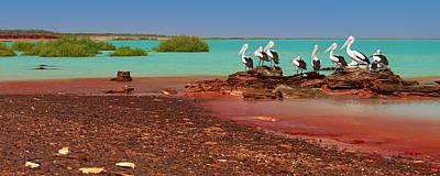 Australian Pelicans Roebuck Bay Art Print by Martin Willis