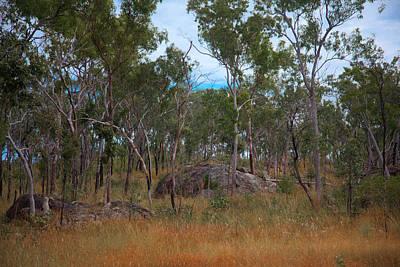 Photograph - Australian Scrub by Carole Hinding