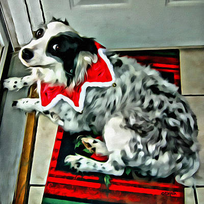 Photograph - Australian Shepherd Christmas Dog by Rebecca Korpita