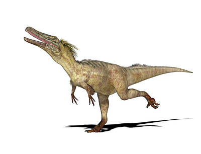 Austroraptor Dinosaur Art Print by Friedrich Saurer