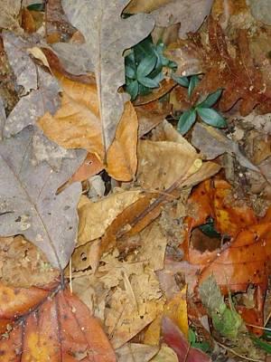 Photograph - Autum Leaves by Glenn Calloway
