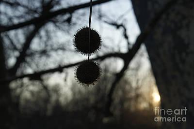 Photograph - Autumm by Isusko Goldaraz