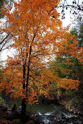 Photograph - Autumn 1 by Dragan Kudjerski