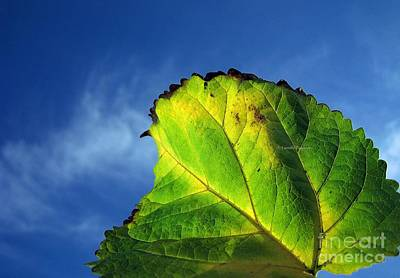 Photograph - Autumn 1 by Vassilis Tagoudis