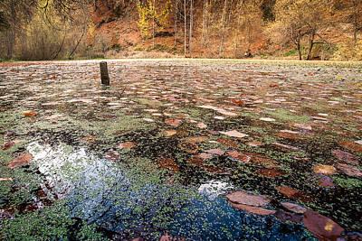 Photograph - Autumn - 10 by Okan YILMAZ
