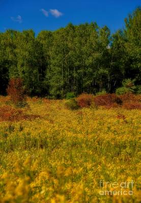A Summer Evening Photograph - Autumn - A Meadow Of Goldenrod by Henry Kowalski