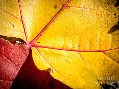 Photograph - Autumn Abstract  by Cheryl Baxter