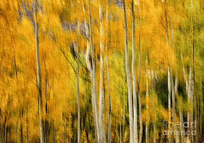 Photograph - Autumn Abstract by Stuart Gordon