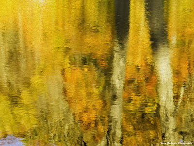 Photograph - Autumn Abstraction by Fran Gallogly
