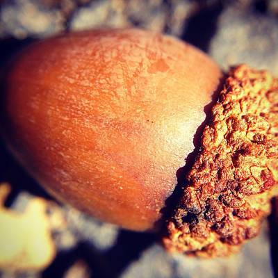 Photograph - Autumn Acorn by Candice Trimble