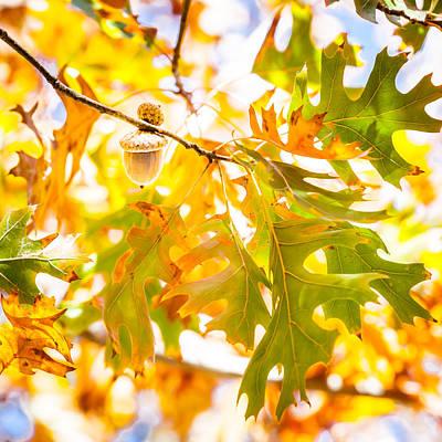 Photograph - Autumn Acorn by Melinda Ledsome