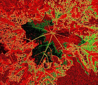 Maple Leaf Art Digital Art - Autumn All Ablaze by Will Borden
