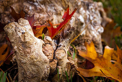 Photograph - Autumn All Tucked In by Melinda Ledsome