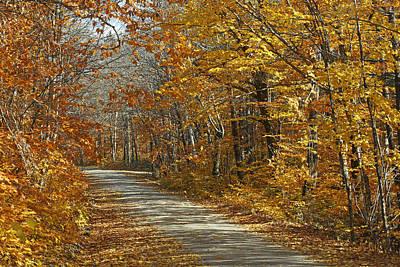A New Beginning Photograph - Autumn American Beech  Baxter State by Scott Leslie