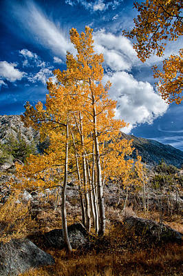 Mountain Royalty-Free and Rights-Managed Images - Autumn and Blue Skies by Cat Connor