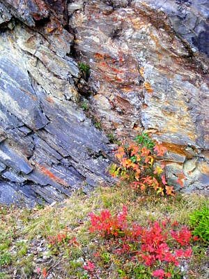 Photograph - Autumn And Rocks Vertical by Duane McCullough