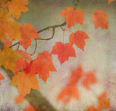 Photograph - Autumn by Angie Vogel