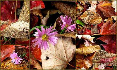 Photograph - Autumn Art 2 by France Laliberte