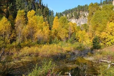 Photograph - Autumn Aspen At Iron Creek by Dakota Light Photography By Dakota