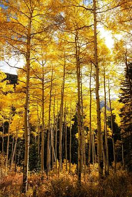 Food And Flowers Still Life - Autumn Aspen Glow by Mitch Johanson