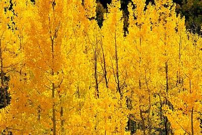 Photograph - Autumn Aspen Grove by Marilyn Burton