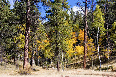 Steven Krull Royalty-Free and Rights-Managed Images - Autumn Aspen by Steven Krull