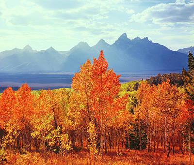 Autumn Aspen Trees In Grand Teton Art Print by Ron thomas
