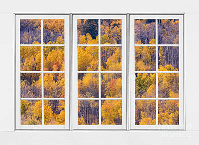 Natural Photograph - Autumn Aspen Trees White Picture Window View by James BO  Insogna
