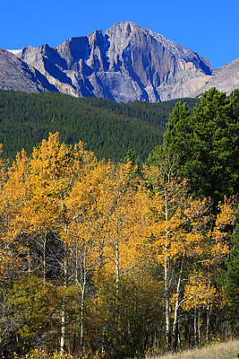 Autumn Aspens And Longs Peak Art Print